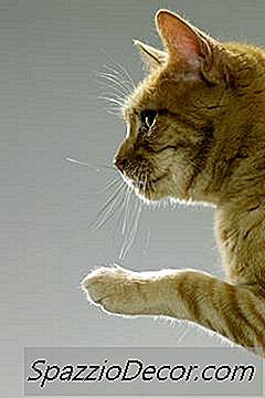 Shampoo Antifúngico Para Gatos