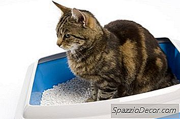 ¿Las Cajas De Arena Con Cubiertas Son Malas Para Gatos?