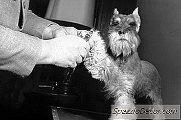 O Custo Médio De Recorte De Unhas Para Cães