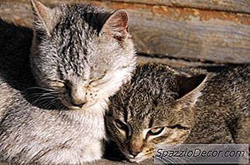 Promedio De Vida De Gatos Frente A Perros