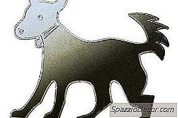 De Best Verzorgde Hondenrassen