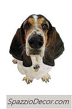 Der Beste Boden Für Hunde, Die Im Haus Urinieren