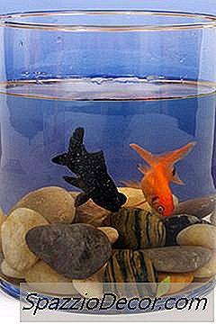 O Melhor Goldfish Companion
