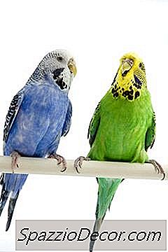 Alimenti Per Uccelli Per Piccoli Pappagalli