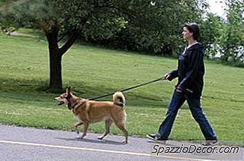 California Dog Leash Laws - 2019