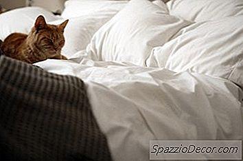 Aromaterapia Calmante Para Gatos