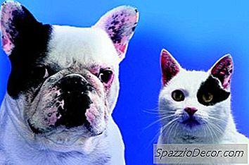 ¿Pueden Los Gatos Tener Corazones Rotos?