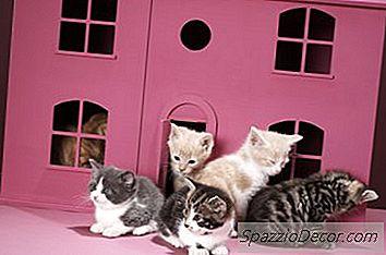 Pisicile Pot Juca Prea Tare Unul Cu Altul