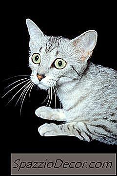 Remedios Caseros Que Calman Gatos