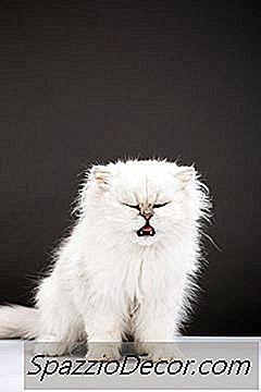 Katte Tager Benadryl Til Hoste