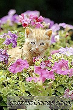 Gatos Que Tienen Fiebre Del Heno