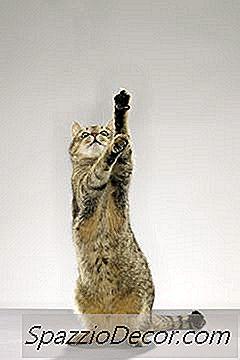 Cosequin Vs. Dasuquin For Cats
