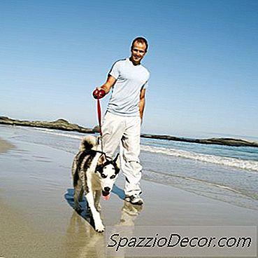 Los Peligros De Las Temperaturas Al Aire Libre Para Perros Husky