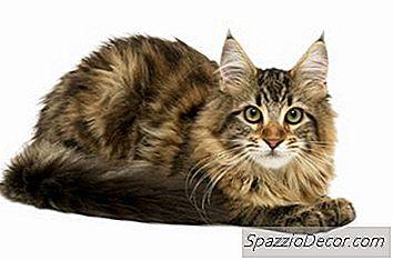 Recomendaciones Dietéticas Para Gatos Con Diarrea Y Parásitos