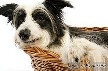 Uma Cama De Cachorro Burrow Diy