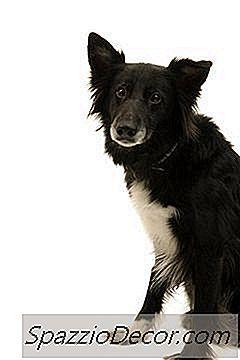 tratamiento mensual de parásitos para los ácaros del oído en perros