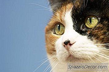 Os Gatos Mastigam Qualquer Coisa