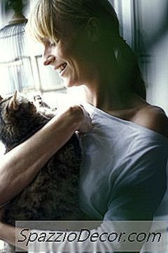 Katter Forstår Menneskers Kroppsspråk Og Følelser.