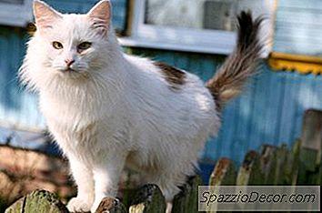 Komen Katten Weg Als Ze Boos Op Je Zijn?