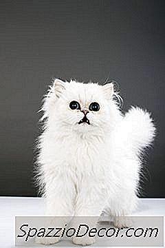 Os Gatinhos Choram Quando Estão Com Fome?