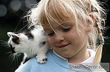 Pisicile Trec Prin Faze Ca Bebelușii
