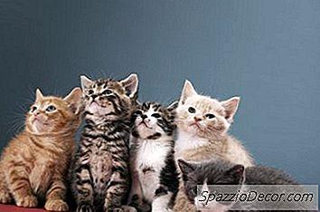 Handelen Mannelijke Katten Vaderlijk En Vaderlijk Naar Kittens?