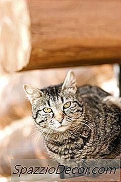 ¿Los Gatos Machos Secretan Un Olor?