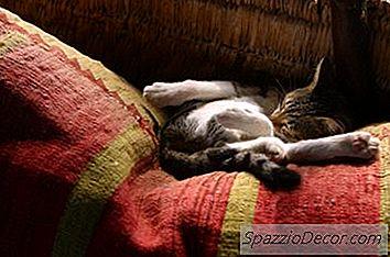 Benadryl Face Pisicile Să Doarmă?