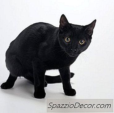 O Prozac Ajuda Um Gato Agressivo?