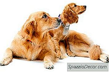 Ciclo De Vida Do Cão