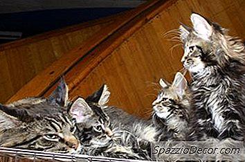 Fatos Sobre Gatos E Gatinhos