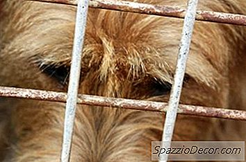 Giardia Vaccine For Dogs