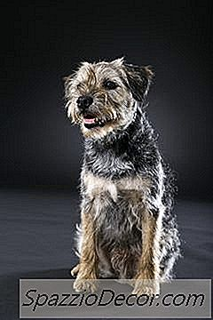 Grooming & Stripping A Terrier