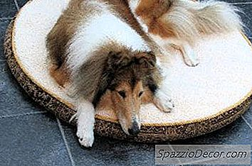 Home Remedies For Canine Colds