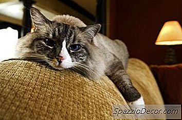 Remedios Caseros Para Desestomatizar Cat Citter