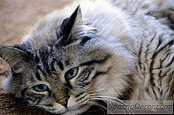 Pisicile Mortii
