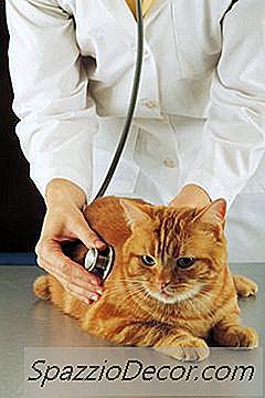 Cum Se Fac Pisicile Sida?