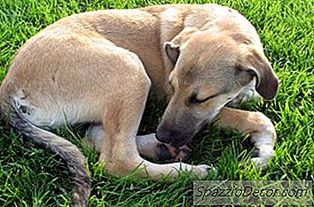 Hoe Kunnen Honden Mange Krijgen?
