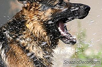 Quantas Vezes Você Deve Lavar Um Cachorro?