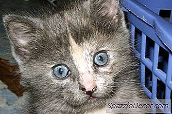 Cómo Adoptar A Un Gatito Callejero