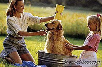 Como Dar Banho Ao Meu Cachorro Depois De Aplicar O Frontline Plus