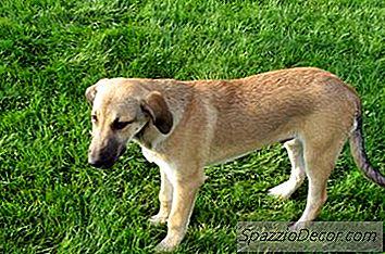 Como Quebrar Um Cão De Fazer Xixi Na Casa