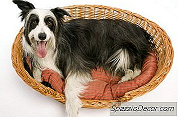 Hur Man Rengör En Extra Luktig Hundsäng