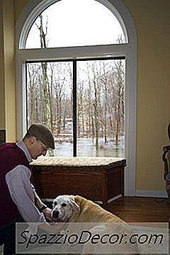 Como Projetar Uma Sala De Cachorro Em Minha Casa