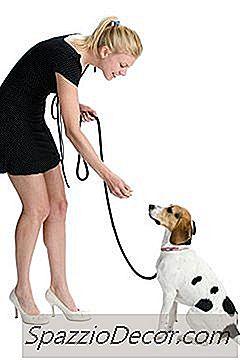 Como Disciplinar Um Cão Que Entra Em Você