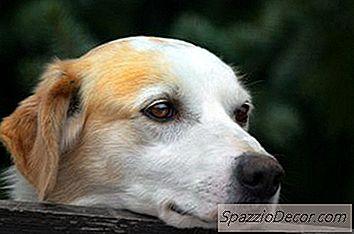 Cómo Desinfectar Después De Giardia En Perros