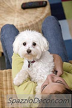 Een Bichon-Puppy Verzorgen