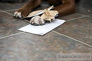 Hoe Te Weten Of Uw Hond Jaloers Is?