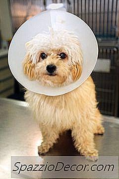 Cómo Hacer Un Collar Isabelino Para Perros