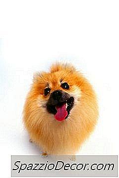 Como Fazer Peles De Pomeranian